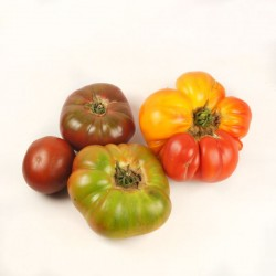 Tomates de variété ancienne...